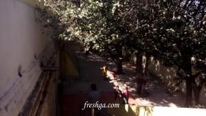 Amaralingeswara-Swamy-temple-amaravati-freshga-1