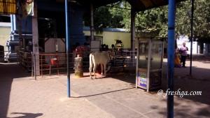 Amaralingeswara-Swamy-temple-amaravati-freshga-11