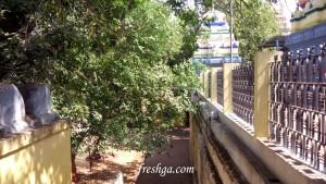 Amaralingeswara-Swamy-temple-amaravati-freshga-2